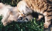 Tierbedarf Auf Rechnung Bestellen Trotz Negativer Schufa